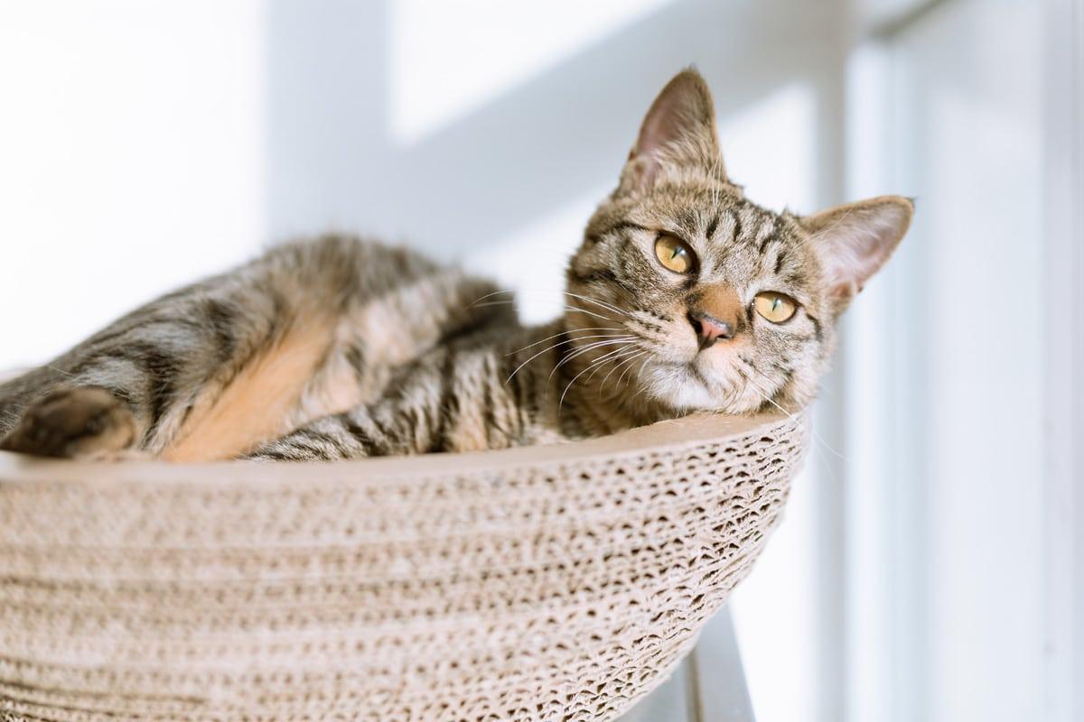 Cat Grooming - Lilydale Vet Centre